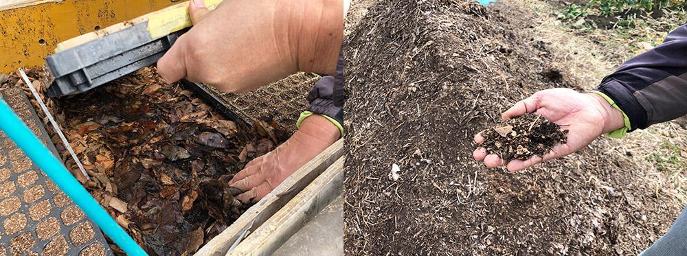 育苗と腐葉土